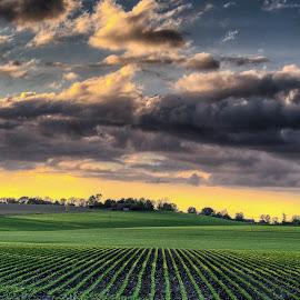 Skåne Sunset by Jerry Kambeitz - Landscapes Prairies, Meadows & Fields ( sweden, skåne, sunset, fall, fields )