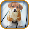 Puppy Live Wallpaper APK for Bluestacks