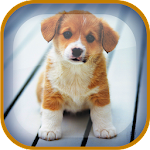 Puppy Live Wallpaper 1.6 Apk