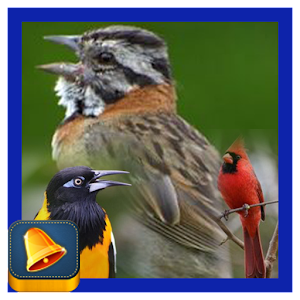 South American Birds Chirp for Android