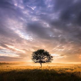 Lonely tree by Alex Jitaru - Landscapes Sunsets & Sunrises