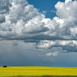 Storms Edge by John Williams - Landscapes Weather ( clouds, canola in bloom, barn, canada, canola fields, storm clouds, storm, landscape )
