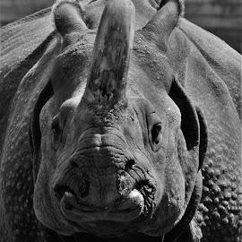 by Rhonda Rossi - Black & White Animals