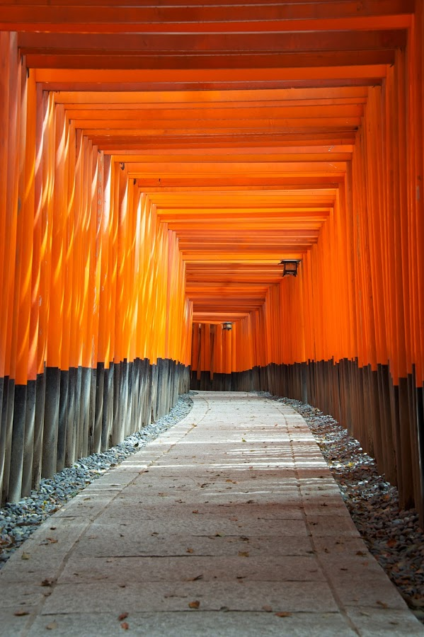 Fushimi Inari Shrine by Paul Atkinson - Landscapes Travel ( temple, orange, torii, red, japan, shrine, inari, kyoto, column, fushimi, pillar, gate )