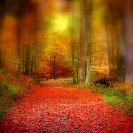 way through a mystical forest by Anže Papler - Landscapes Forests ( mood factory, color, lighting, moods, colorful, light, bulbs, mood-lites )