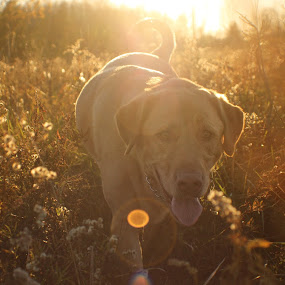 On the path by David Vanveen - Animals - Dogs Playing ( animals, dogs, funny, cute )