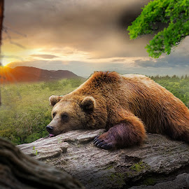 A bear in the forest..  by M. Andersen - Digital Art Animals