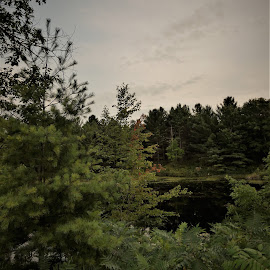 by Denise O'Hern - Landscapes Forests