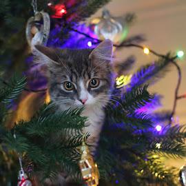 by Jane Bjerkli - Public Holidays Christmas