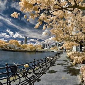 by Stanley Chan - City,  Street & Park  Vistas
