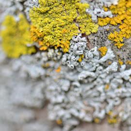 Fungi by Saravanan Arumugam - Nature Up Close Mushrooms & Fungi ( fungi )
