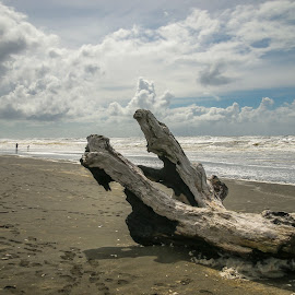 by Kathy Suttles - Landscapes Beaches ( washington, suttleimpressions, pacific beach, west coast, olympia national park )