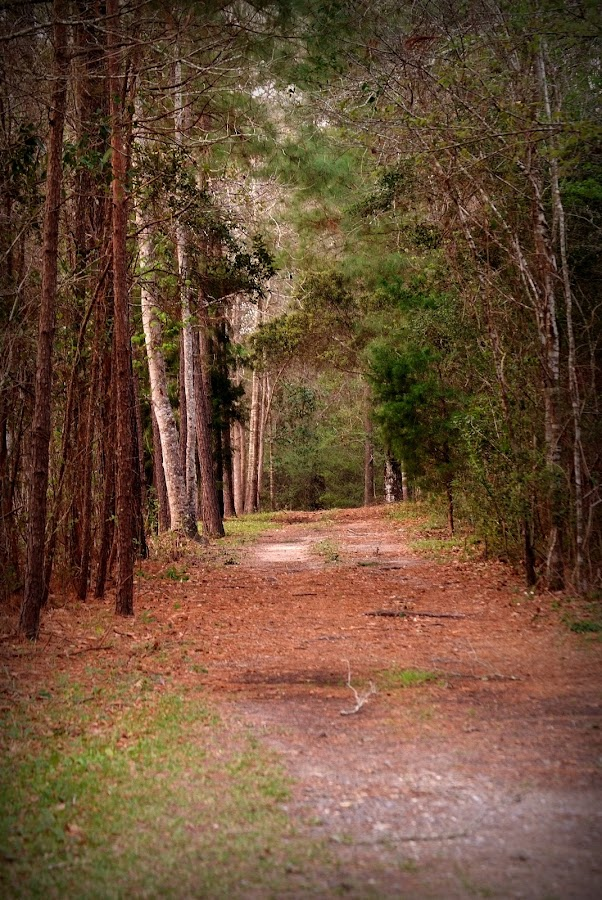 Pathway by Brenda Shoemake - Nature Up Close Trees & Bushes