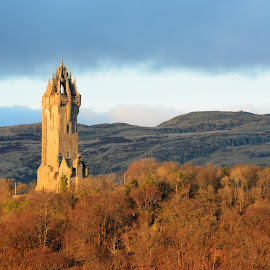 Wallace Monument by Wendy Milne - Buildings & Architecture Statues & Monuments ( stirling, scoltland, trees, wallace monument, golden hour )