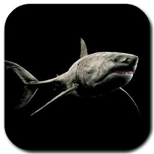 Shark 4K Video Live Wallpaper