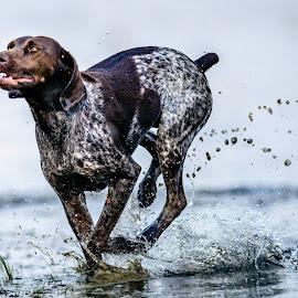 Free by Marnoe Elzanne - Animals - Dogs Running