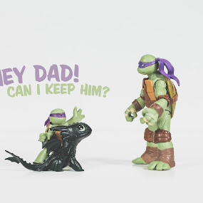 Pets by Jonathan Stolarski - Typography Captioned Photos ( toywar, toy, tmnt, dragon, toothless, turtle )