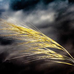 Grass by Zoran Mrđanov - Nature Up Close Leaves & Grasses
