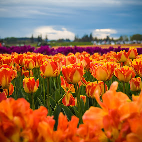 Spring Colors by Ivan Johnson - Flowers Flower Gardens (  )