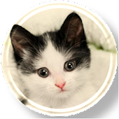 Free Download Cute Cats Wallpapers APK for Samsung