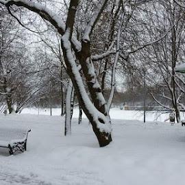 Have a seat guys!! by Bheng Natividad - City,  Street & Park  Neighborhoods ( winter, park, bench, snow, river )