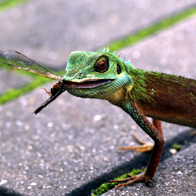 by Milla Kantola - Animals Reptiles