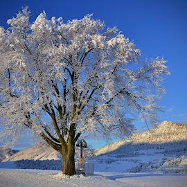 solitare by Jojo Pried-Horsky - Landscapes Prairies, Meadows & Fields ( solitare, winter, nature, slovakia, slovensko )