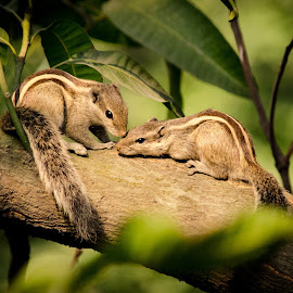 Eternal Love by Arka Maitra - Animals Other Mammals ( #animal, #love, #relationship, #eternal love, #squirrel )