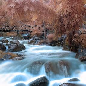 Natural Harmony by Irawan Sudjana - Landscapes Waterscapes