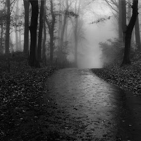 Silhouettes by Ingrid Dendievel - Landscapes Forests ( hill, nature, trees, forest, landscape, mist )