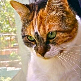 { Snoopy ~ Ready To Strike ~ Gecko outside window ~ 29 June }  by Jeffrey Lee - Animals - Cats Portraits ( { snoopy ~ ready to strike ~ gecko outside window ~ 29 june } )