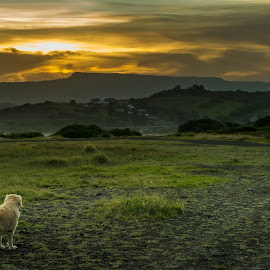 Dog Watching the Sunset by Michael Choi - Landscapes Sunsets & Sunrises ( field, mountain, grass, sunset, art, landscape, dog )