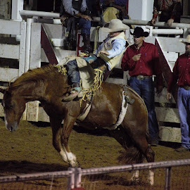 by Monroe Phillips - Sports & Fitness Rodeo/Bull Riding