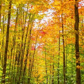 by Dmitriy Andreyev - Landscapes Forests