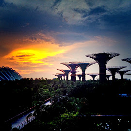 Gardens by the Bay by Janette Ho - Instagram & Mobile iPhone (  )