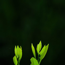 Green by Nil Jay - Nature Up Close Leaves & Grasses