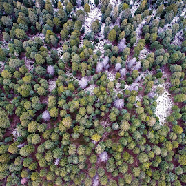 by Benjamin Logsdon - Landscapes Forests
