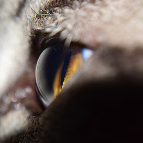 cat eye by Zainuddin Junidil - Animals - Cats Portraits
