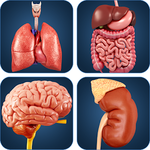 Download My Organs Anatomy APK
