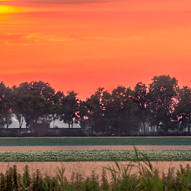 sunset by Ton Boelaars - Landscapes Sunsets & Sunrises ( orange, houses, grass, sunset, landscape, evening )