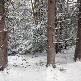 Tree trees in the snow by Jack Nevitt - Landscapes Weather ( winter, park, birdhouse, falls, snow, trail, state, blackwater, trees, wv )