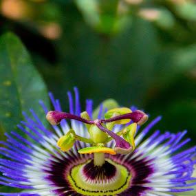 Flower 1 by Benjamin Dean - Flowers Single Flower