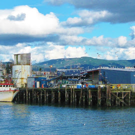 A Cloudy Day at Squalicum Harbor by Christine McEwan - Novices Only Objects & Still Life ( water, clouds, washington, coast guard, squalicum harbor, cannery, bellingham, blue, boats, seagulls, bellingham bay, dock )