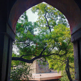 The View from here... by Snehanshu Shome - Buildings & Architecture Statues & Monuments ( doors, old town, trees, india, monument, view, delhi )