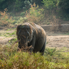 Elephant by Vaibhav Jain - Animals Amphibians ( trunk, park, elephant, eaing, big animal, standing, animal )