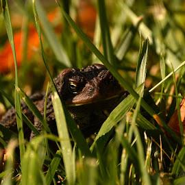 by Tiffany Covey - Animals Amphibians