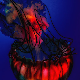 Jelly Fish by Dave Walters - Nature Up Close Water ( macro, mystical, nature, flowers, lumix fz2500 )