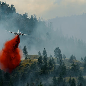 Carelessness  by Thomas Born - News & Events World Events ( forest fire, fire bomber, fire retardent,  )
