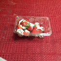 Strawberry ( Food Mold On Strawberries )