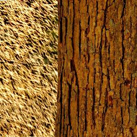 Watering The Garden by Caroline Flaherty - Nature Up Close Trees & Bushes ( water, backlit, sprinkler, tree, bark, garden )